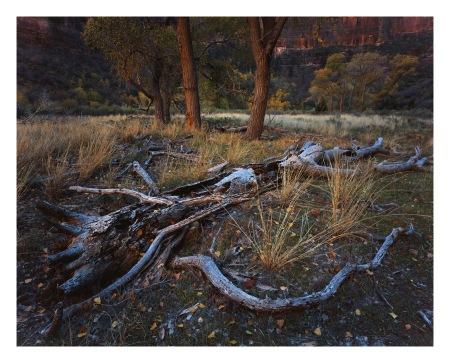 Life Everlasting | Fuji Velvia 50 8x10 | Nikkor 150mm SW