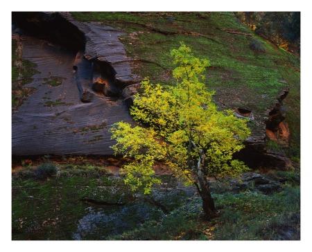 Tree of Life | 30 sec @ f/45 | Velvia 50 8x10